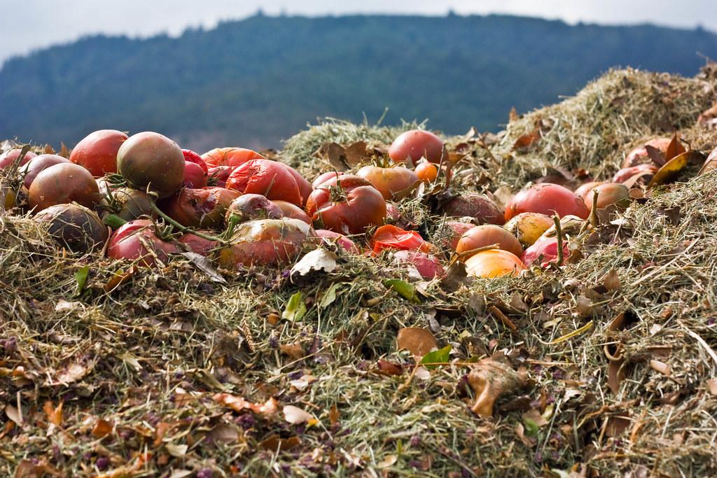 Kompostování jablek